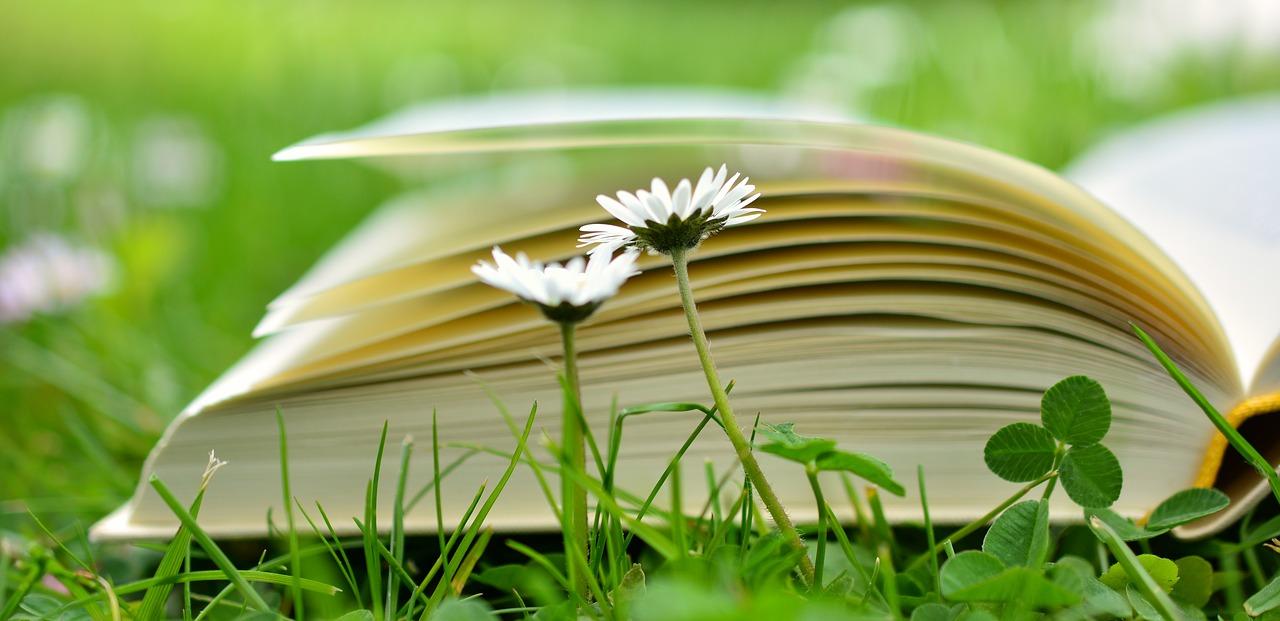 könyv a réten